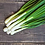 Thumbnail: Southport White Globe Bunching Onion - 250 Seeds