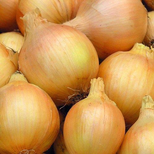 Yellow Sweet Spanish Onion - 300 Seeds