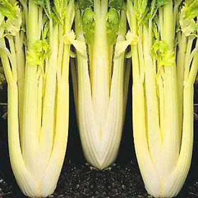Golden Self Blanching Celery - 500 Seeds