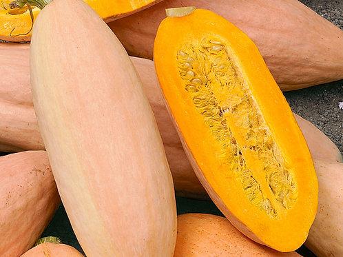 Pink Banana Jumbo Squash Winter - 25 Seeds