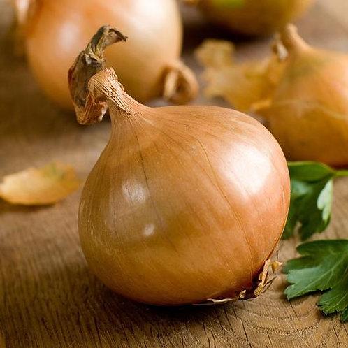 Texas Early Grano Onion - 100 Seeds