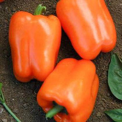 Orange King Pepper - 30 Seeds