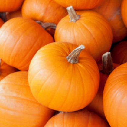 Pumpkin Sugar Pie - 50 Seeds