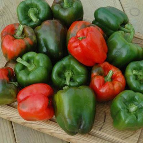 Keystone Resistant Giant Sweet Pepper - 40 Seeds