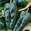 Thumbnail: Poblano Ancho Grande Pepper - 50 Seeds