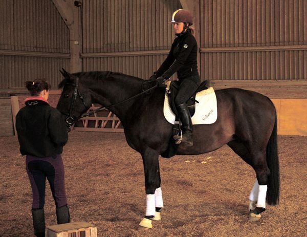 The Right Start Part 3 - Developing The Walk And Trot