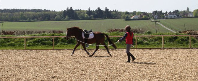 The Right Start Part 1 - Groundwork and Lunging