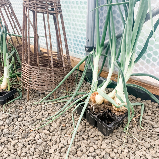 fossoway stables onions