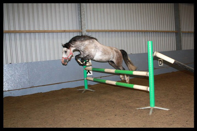 The Right Start Part 4 - Pole Work And Teaching Your Horse To Jump