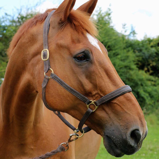 Saying Goodbye Part 1 - Making The Decision To Have Your Horse PTS
