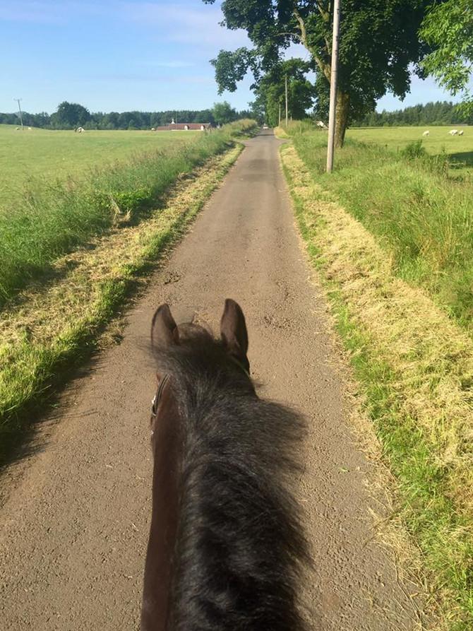 Bringing Horses Back Into Work
