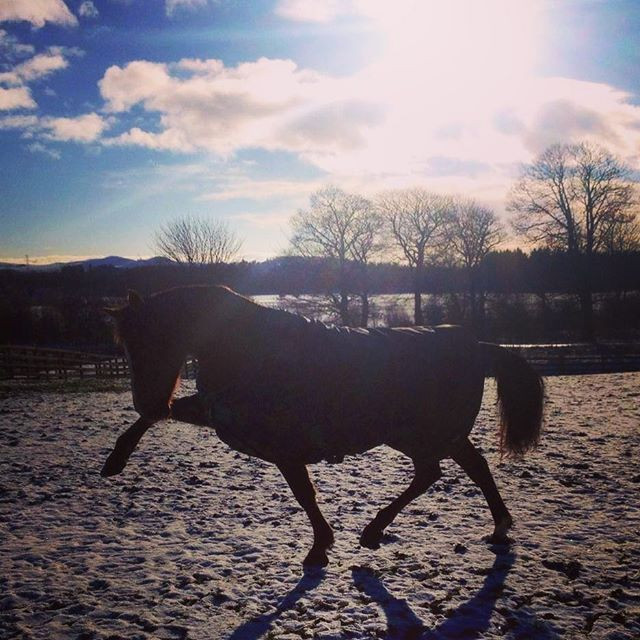 How To Survive Winter On A Livery Yard