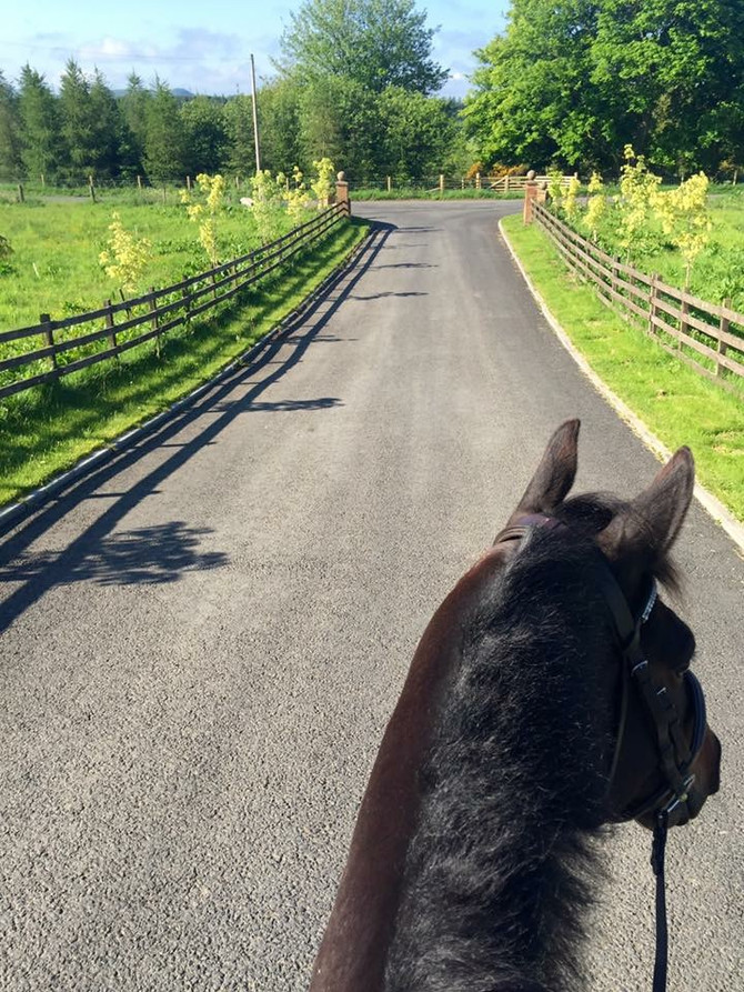 The Right Start Part 5 - Venturing Outside and Cantering