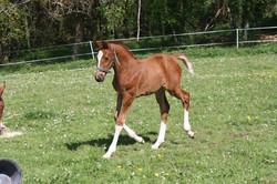 Facebook - Envoyé Spécial Varnel - Ici à 1 mois  - Reverdy Foal