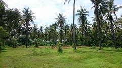 купить землю на Бали