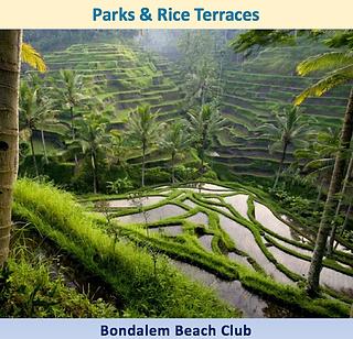 riceterraces.png