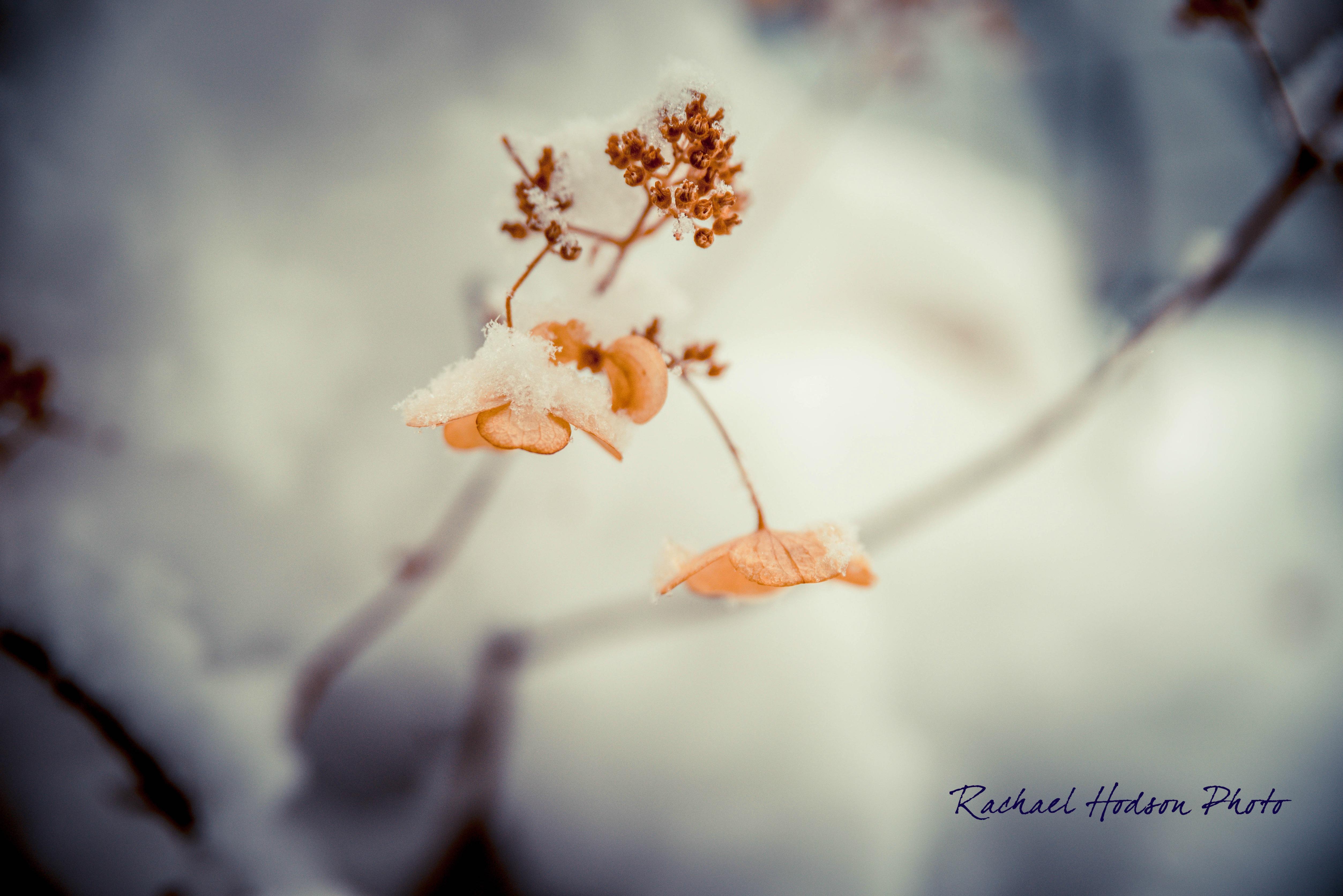 Winter Petals