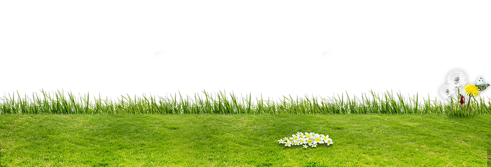 jardin2.png