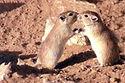 חי רמון ממוקם סמוך למרכז המבקרים במצפה רמון. רשות הטבע הגנים פתחה את האתר על מנת לאפשר למבקרים לפגוש את חיות הבר, הזוחלים והמכרסמים אותם קשה יותר לראות בטבע. לעיתים טיול באזור מדברי משאיר רושם שהמדבר שומם ולא כך הוא. מתחת לפני השטח הכול רוחש וחי. בחי רמון תוכלו לראות חיות פעילות לילה או זוחלים ומכרסמים החיים מתחת לאבן. בתצוגה הסברים מפורטים וניתן לבלות במקום מספר שעות כאשר הילדים יקבלו דפי הפעלה שילמדו אותם על החיות.