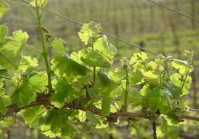 Spring in Carmey Avdat1294930