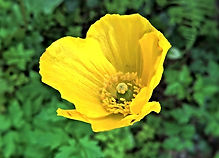 flower-4235422_640.jpg