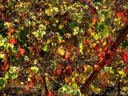 Autumn in Carmey Avdat