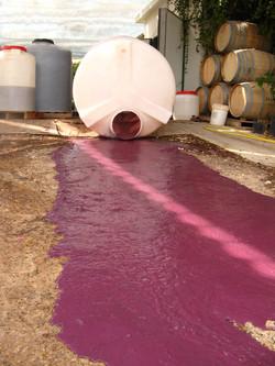 ייצור יין בכרמי עבדת