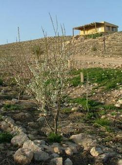 Spring in Carmey Avdat