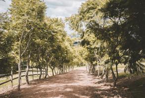 carvalho-branco-12.jpg