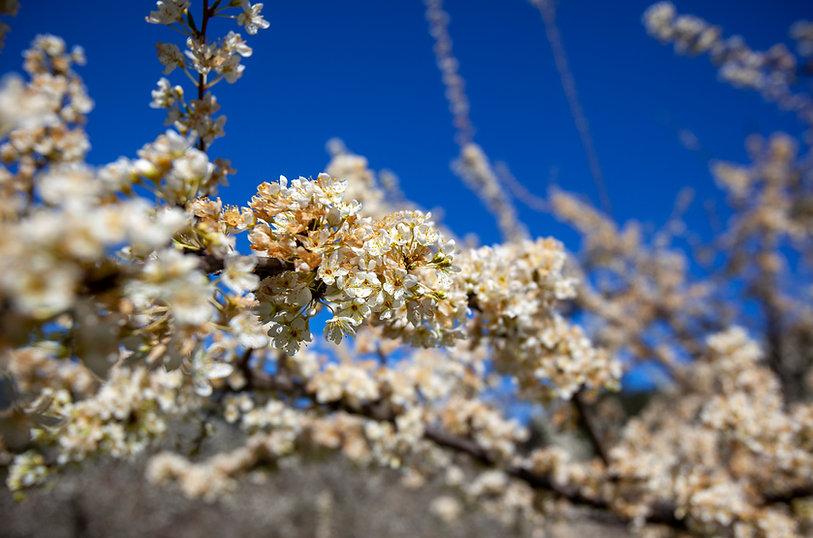 nukem.orchard.IMG_8520.jpg