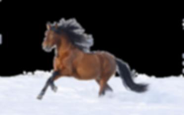 HORSE NEW CONCEPT