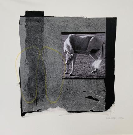 Herd Mentality - 2020
