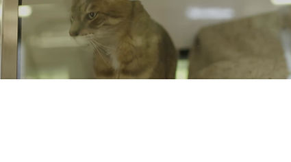 Video about Sue Hartley as the Feline Welfare Manager at Battersea Dogs and Cats Home