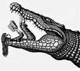 Supine Girl Reading a book in the open jaws of an alligator