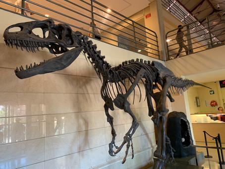 Le musée des sciences naturelles de Madrid