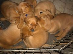 puppy 6.jpg