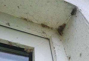 Spider Webs Before.jpg