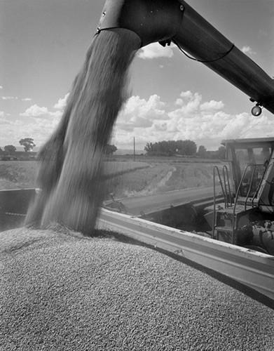 Wheat truck