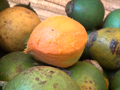 FVS afirma que surto de intoxicação após a ingestão de tucumã está controlado em Manacapuru