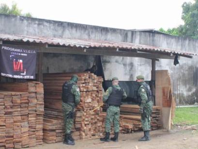 Batalhão Ambiental apreende madeira oriunda de extração ilegal em Manacapuru