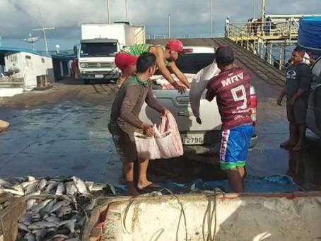 Batalhão Ambiental apreende duas toneladas de pirarucu ilegal em Manacapuru
