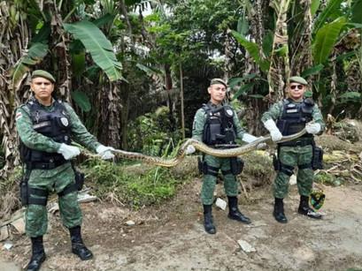 Polícia Ambiental resgata cobra em via pública de Manaus