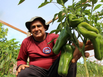 No Dia do Agricultor, Governo do Amazonas destaca investimentos e avanços no setor rural