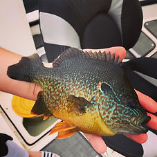 Guided Fishing Trips Lake Minnetonka