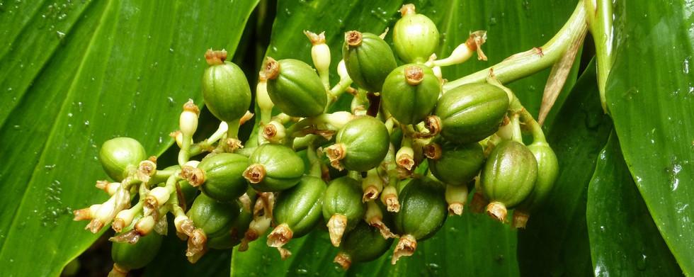 coffee-plant-1159649.jpg
