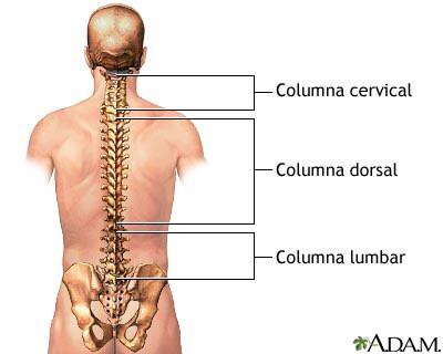 Descodificación de la espalda - columna vertebral.