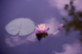 Laveda-Nicole-Hodel-entspannen-Meditatio