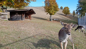 Hirschpark-Willisau.jpg