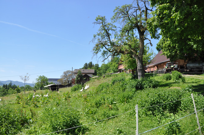 Biohof-Demeter-Hof-Knuesligen-Malters (3
