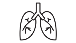 Lungs Vector.png